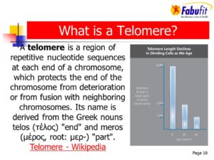 What is a Telomere